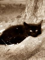 Little Black Kitten by AngelicalEyes