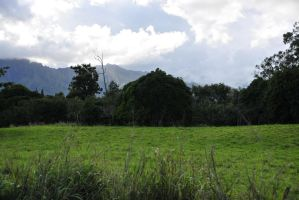 Kauai Field and Mountain Stock by Schwartze