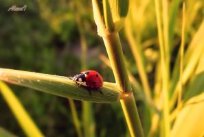 Tiny lady bug :) by missfortune11