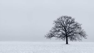 Lonely tree by Estelar