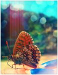 Butterfly by ironicna