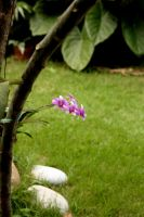 Baby Orchid by vanns