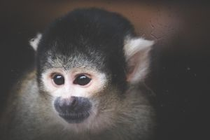 Monkey2 by lucyparryphotography