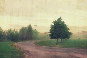 Early Morning by Amalus
