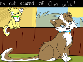 I'm not scared of stupid Clan cats! by Emberlight210