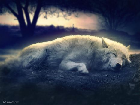 solitary wolf by ZedLord-Art