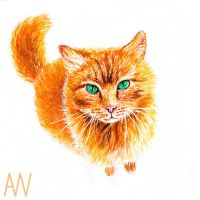 Cat by Andrew-Willson