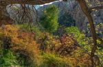 The nature of Zagros by amirskip4life