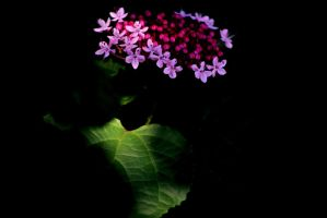 Flowers Glowing In The Dark by RobertRobledo