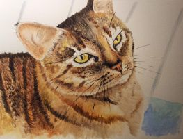 My sister's cat by BecciES