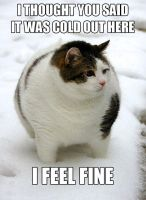 So this is exactly my friends cat. by A-Mad-Russian-Pony