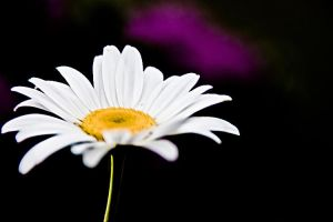 Driving Miss Daisy Macro - lol by Witch-Dr-Tim