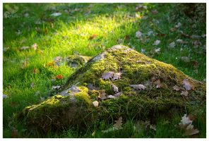 moss-grown by Mrs-Cloudia-S