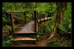 Forest Bridge by planetshu