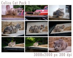 Calico Cat Pack 1 by tennyoSTOCK