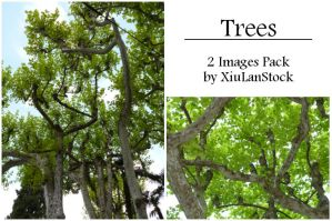 Trees stock Pack by XiuLanStock