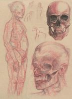Anatomical Study 2-4 by Cool-Clothes