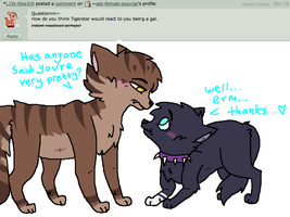 Answer 11: Tigerstar by ask-female-scourge