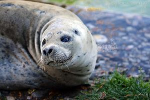 Seal by Sagittor