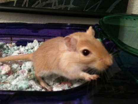 Bacon The Gerbil by KenpachiFanlover9