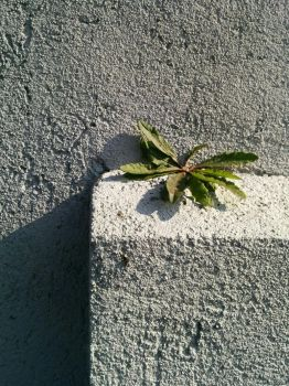 Life in the Concrete by tossedpenny