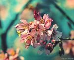 Just a Memory of Spring IV by MyLifeThroughTheLens