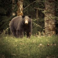 Big Black Bear by jonaslee