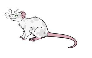 Mysterious-Lil-Lady's Ratty 558 by Pitter-Paws-Rattery