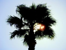 Palm in the South by Ghillips