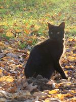 in the light by ocean-dance