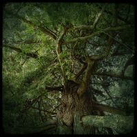 Tree by Rose-Mist