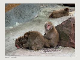 Life in Zoo 20 by firework