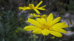 Yellow Flowers by FarukAytekin
