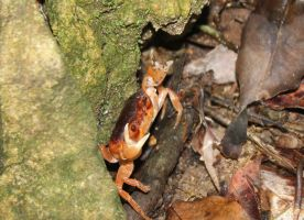 Little Crab Enlarged by rayna23