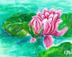 Water Lily by caitiedidd