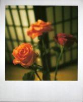 Roses - scan0059 by SmellsLikeDookie