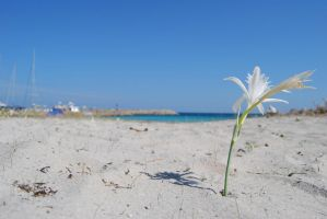 White Flower by elscotto