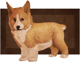 Corgi by Mauston-girl