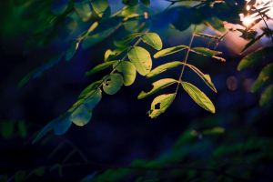 Evening leaves by luka567
