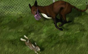 Nudari Special Rabbit Hunt by Payna