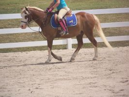 Horse show stock 3 by shush-stock