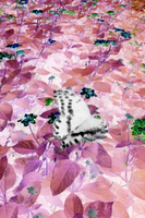 ButterFly by OtherWorldyImages