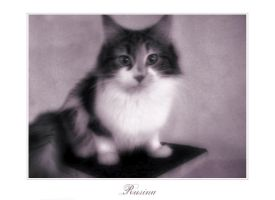 Rusina the Cat by Viika