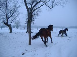 Playing in the snow by horsesrock12