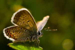 Only a butterfly by padika11