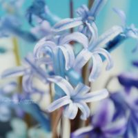 Light Blue by DorotejaC