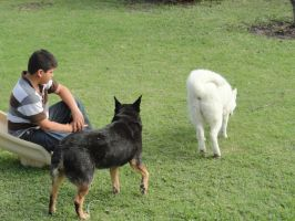 Nephew and Dogs 2 by Moongaze14