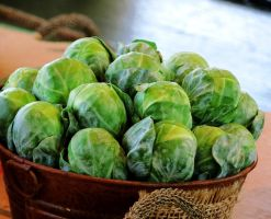 Brussels Sprouts by Kitteh-Pawz