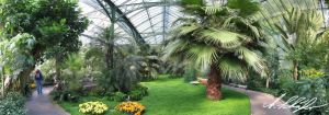 Palmenhaus by Stratege