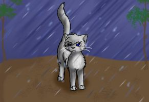 Ashfur in the rain by rainfrost13